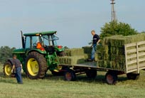 Haymaking Basics